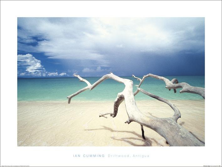 Ian Cumming (Driftwood, Antigua) Art Prints