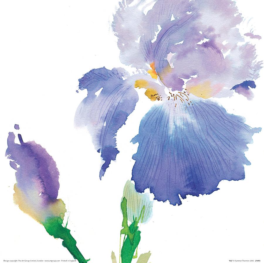 Summer Thornton (Iris) Art Prints