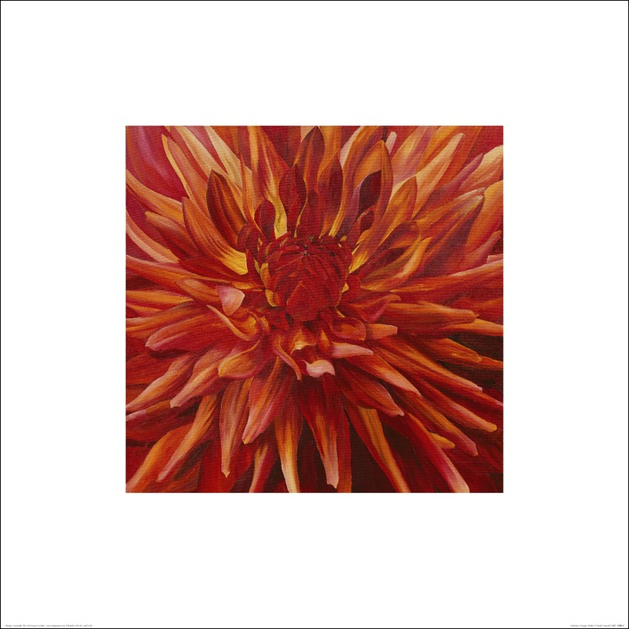 Sarah Caswell (Fabulous Orange Dahlia) Art Prints