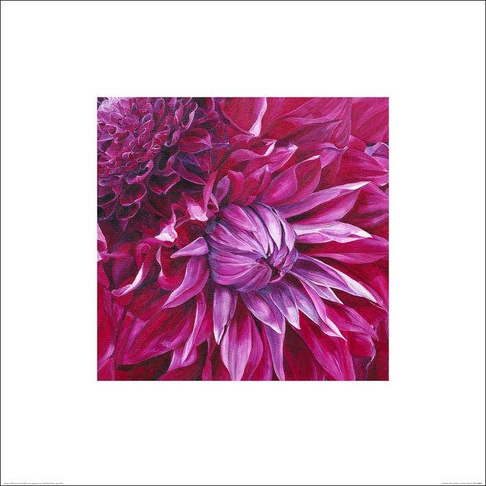 Sarah Caswell (Fabulous Pink Dahlias) Art Prints