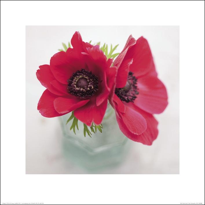 Ian Winstanley (Red Anemones) Art Print