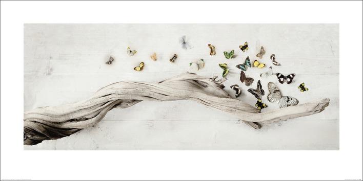 Ian Winstanley (Drift of Butterflies) Art Prints