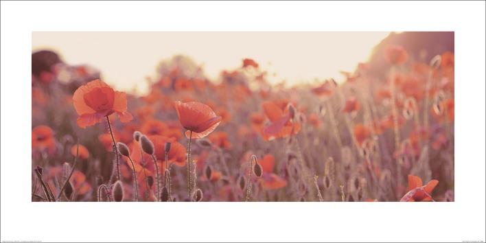 Ian Winstanley (Field of Poppies) Art Prints