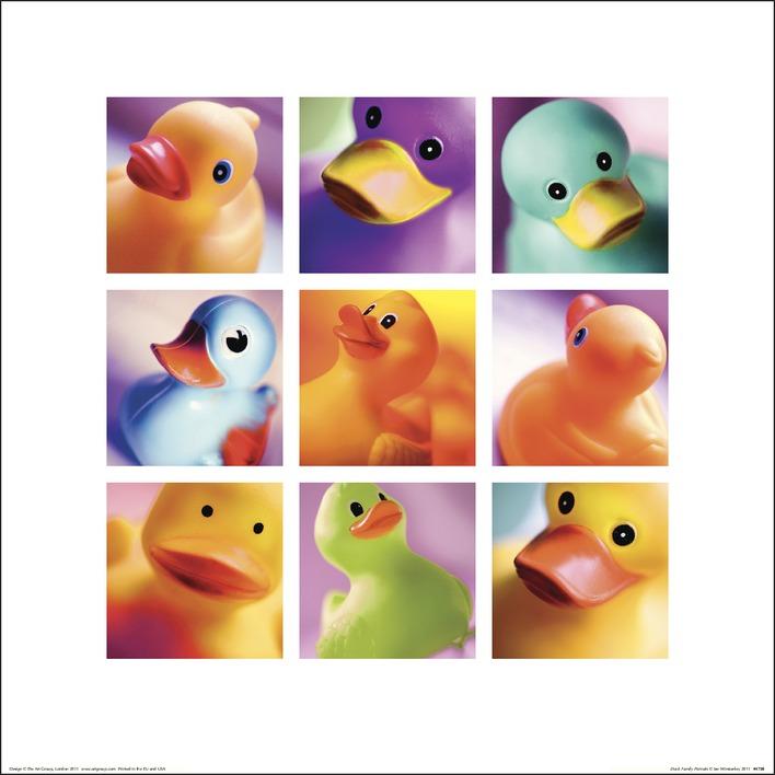 Ian Winstanley (Duck Family Portraits) Art Prints