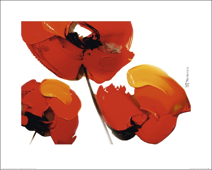 Tibi Hegyesi (Three Poppies - White) Art Prints