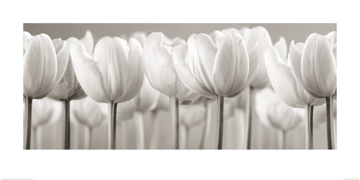 Ian Winstanley (White Tulips) Art Prints