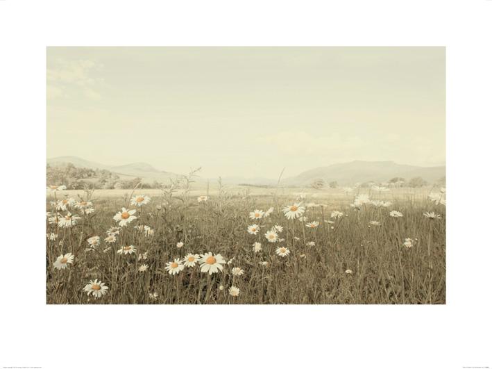 Ian Winstanley (Field of Daisies) Art Prints