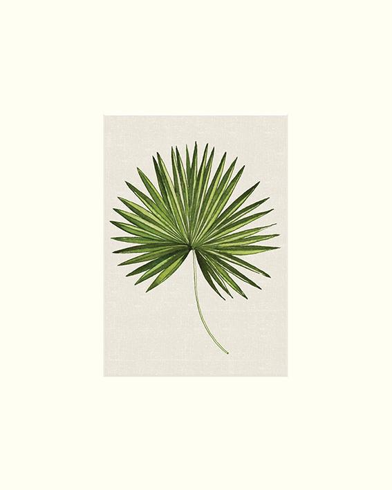 Summer Thornton (Tropical Leaf III) Mounted Prints
