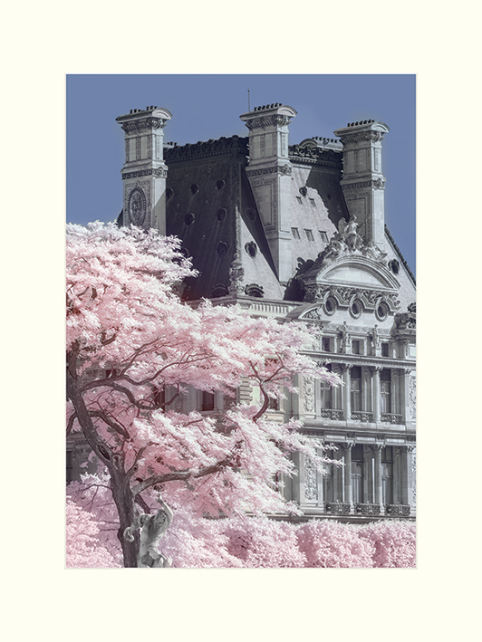 David Clapp (Jardin de Tuilieres Infrared, Paris) Mounted Prints