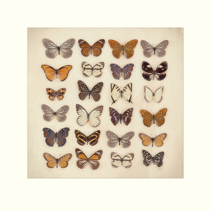 Ian Winstanley (Butterfly Collection) Mounted Prints