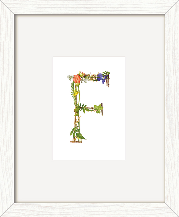 Howard Shooter (Floral F) Pre-Framed Art Print