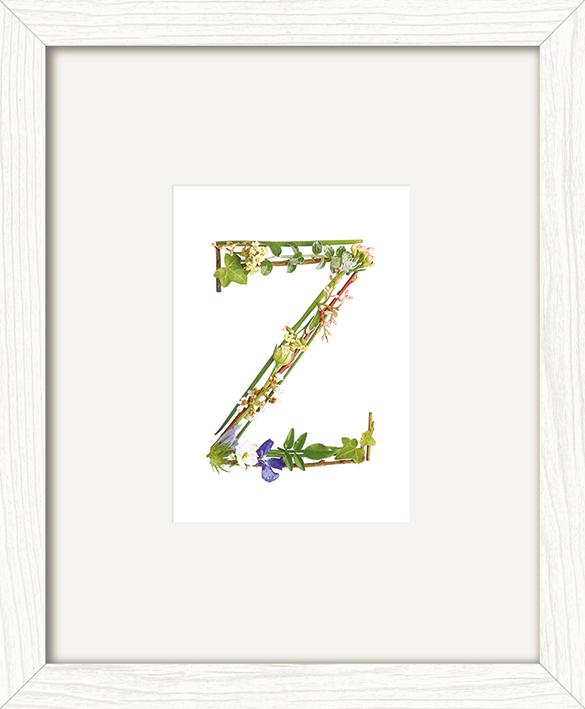 Howard Shooter (Floral Z) Pre-Framed Art Print