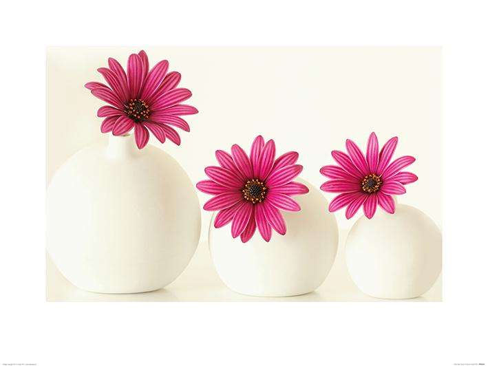 Alyson Fennell (Pink Cape Daisies) Art Print