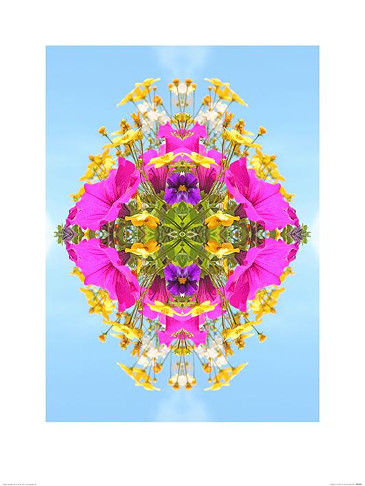 Alyson Fennell (Explosion of Colour) Art Print