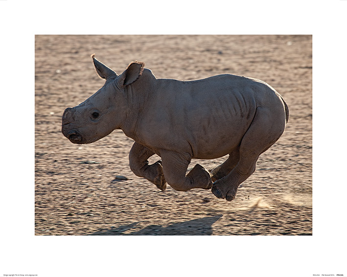 Pete Seaward (Rhino Run) Art Print
