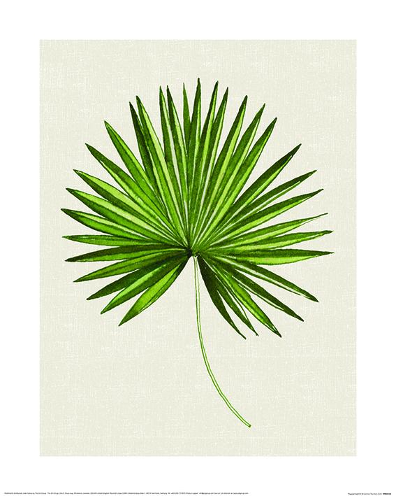 Summer Thornton (Tropical Leaf III) Art Prints