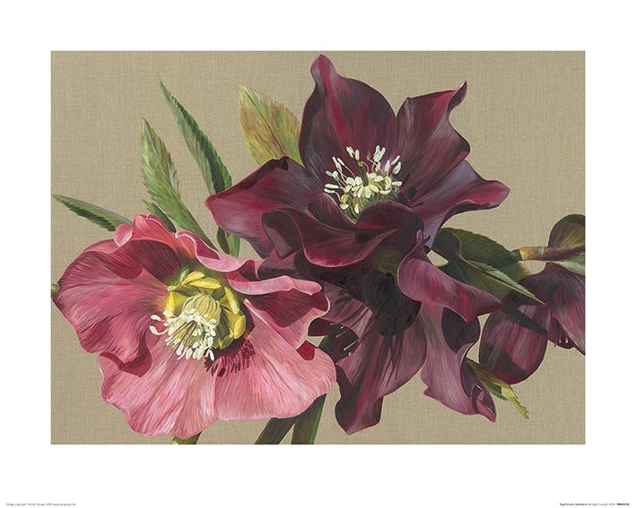 Sarah Caswell (Nightshade Hellebore) Art Prints