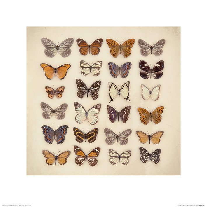 Ian Winstanley (Butterfly Collection) Art Prints