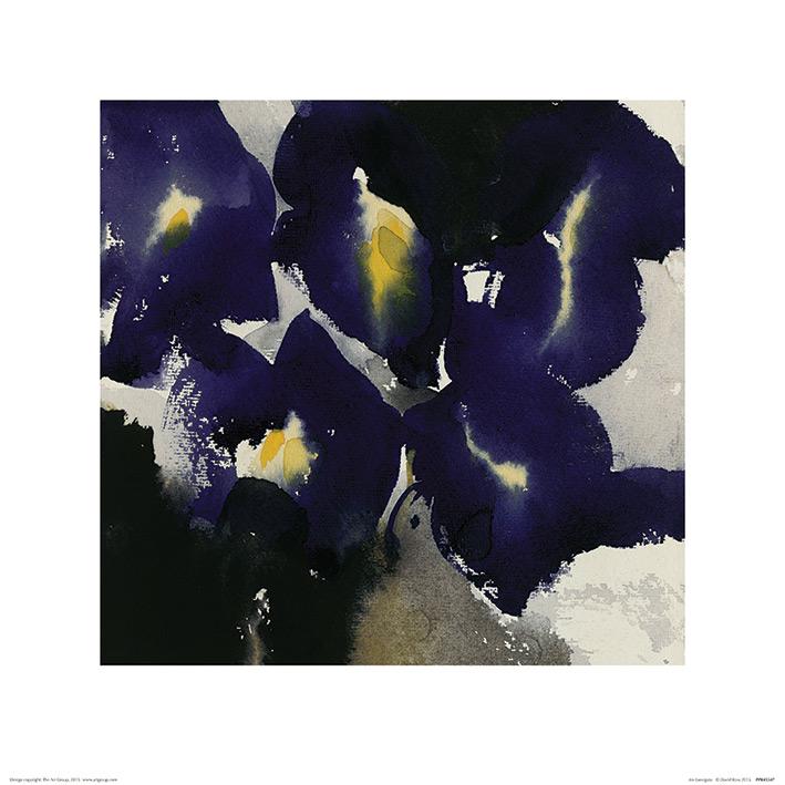 David Ross (Iris Laevigata) Art Prints