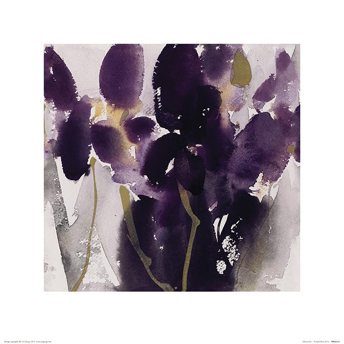 David Ross (Siberian Iris) Art Print