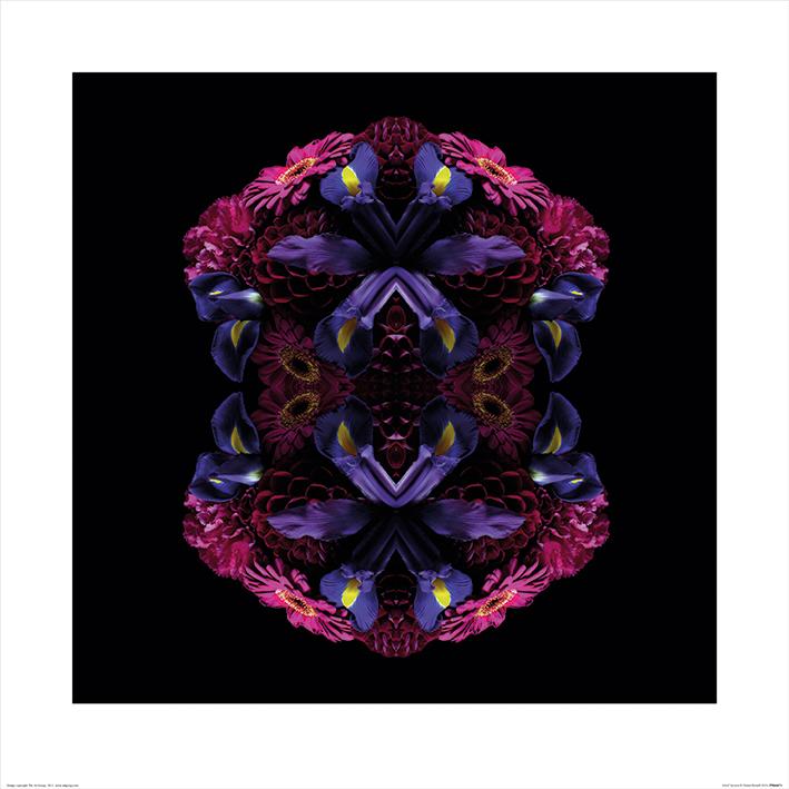 Alyson Fennell (Floral Nirvana) Art Prints