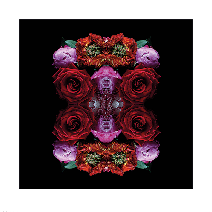 Alyson Fennell (Paradise of Petals) Art Prints