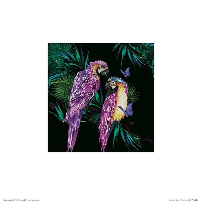 Summer Thornton (Parrots) Art Prints