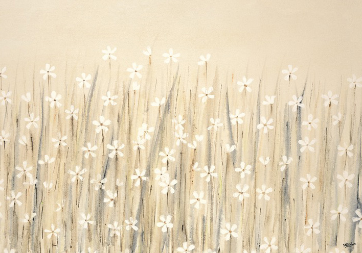 Simon Fairless (Field Of Starry White Flowers) Canvas Prints