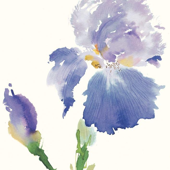 Summer Thornton (Iris) Canvas Print