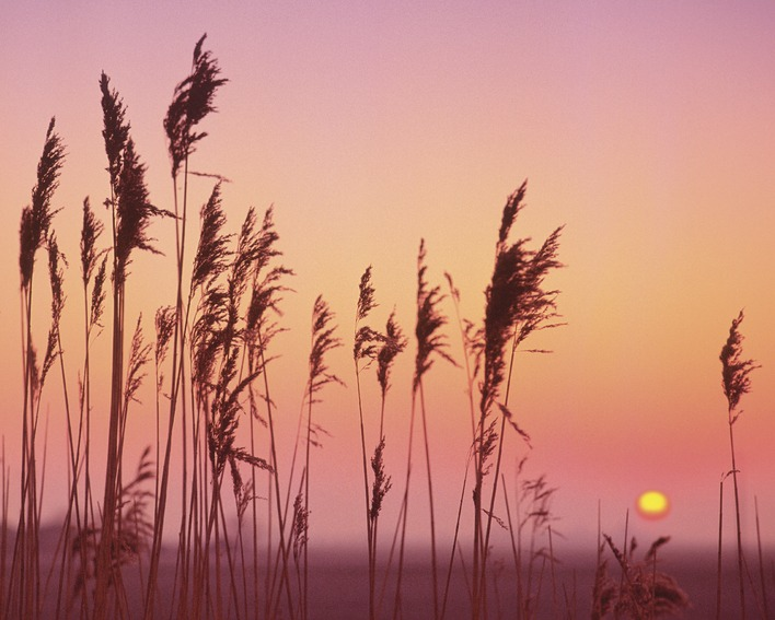 Rod Edwards (Fenland Sunrise) Canvas Prints