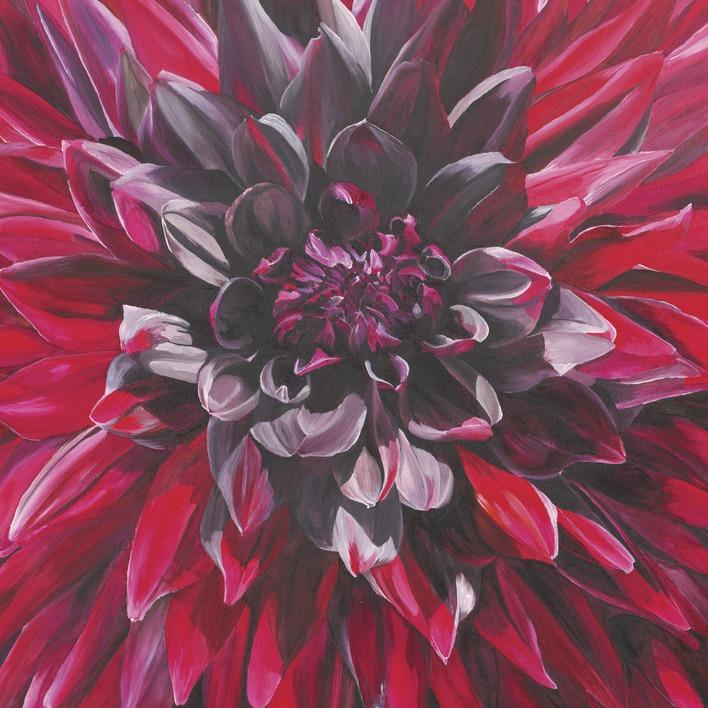 Sarah Caswell (Fabulous Black Wizard Dahlia) Canvas Prints