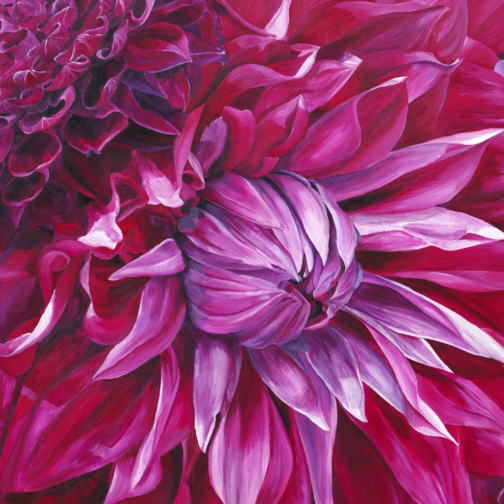 Sarah Caswell (Fabulous Pink Dahlias) Canvas Prints