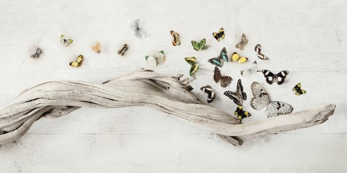Ian Winstanley (Drift of Butterflies) Canvas Prints