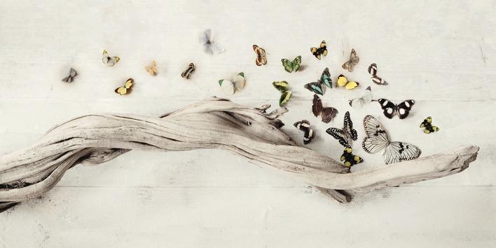 Ian Winstanley (Drift of Butterflies) Canvas Print
