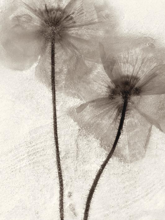 Ryuijie Douglas (Ice Form 60) Canvas Print