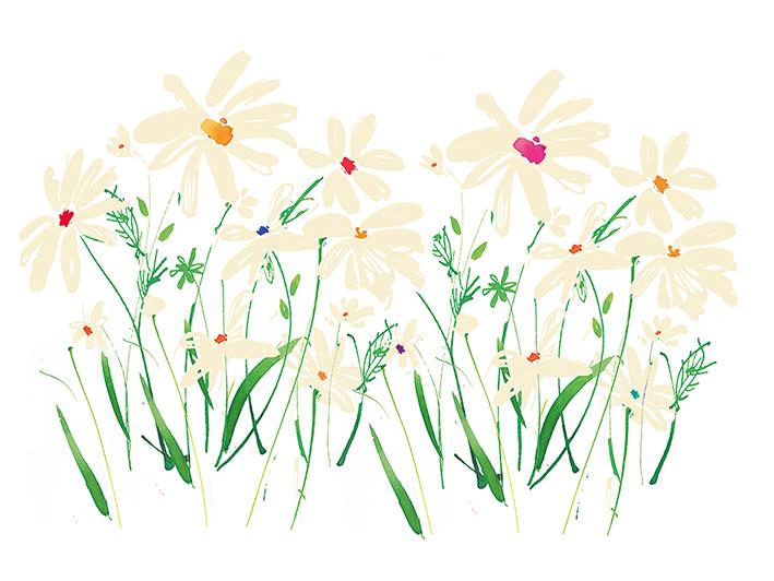 Summer Thornton (Marguerite Daisy) Canvas Print
