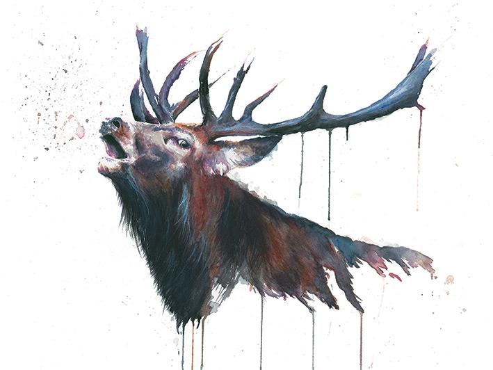 Sarah Stokes (Roar) Canvas Prints