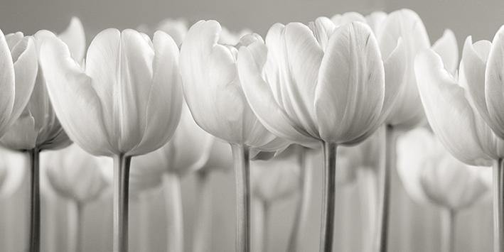 Ian Winstanley (White Tulips) Canvas Print