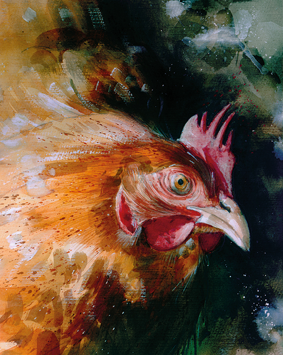 Simon Howden (Brown Chicken) Canvas Prints