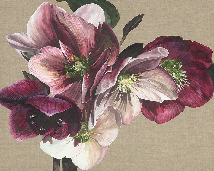 Sarah Caswell (Hellebore IV) Canvas Prints