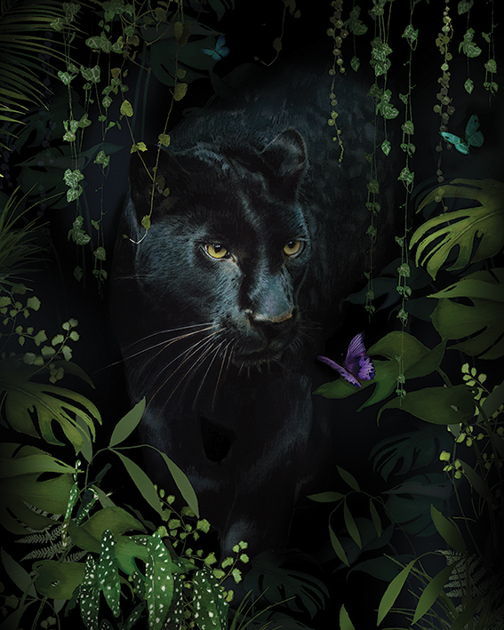 Summer Thornton (Panther) Canvas Prints