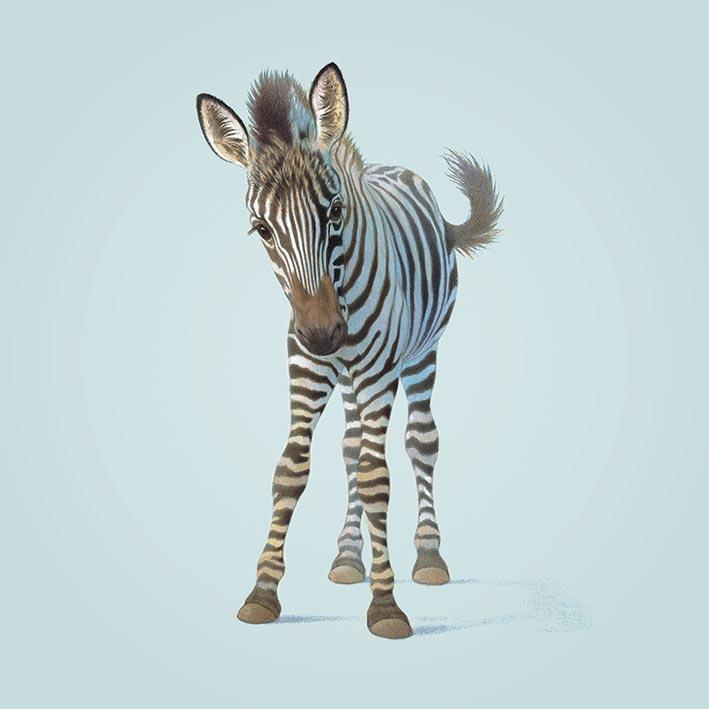 John Butler (Zebra) Canvas Prints