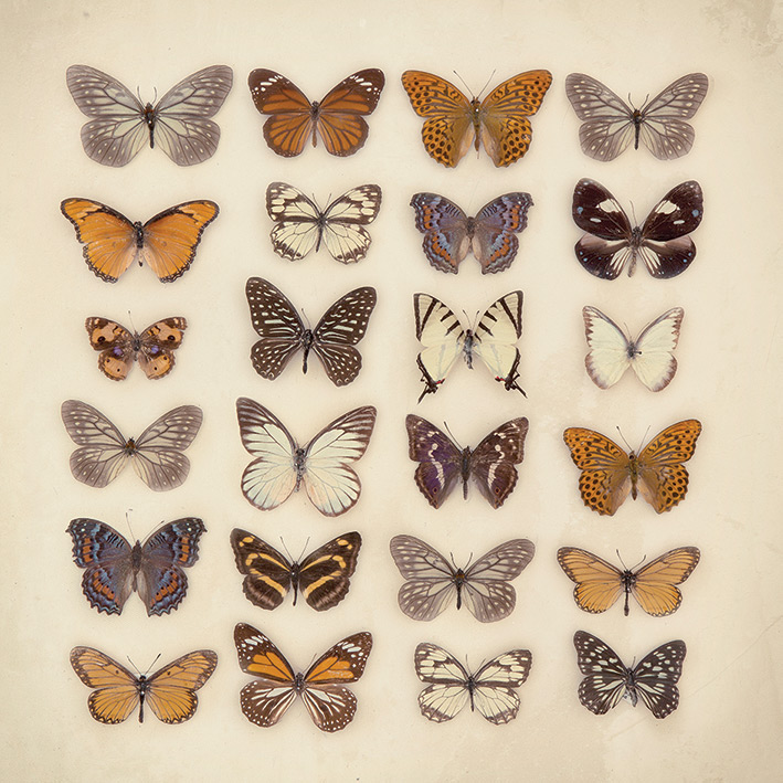 Ian Winstanley (Butterfly Collection) Canvas Prints