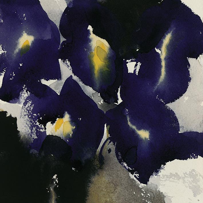 David Ross (Iris Laevigata) Canvas Print
