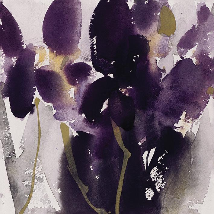 David Ross (Siberian Iris) Canvas Prints