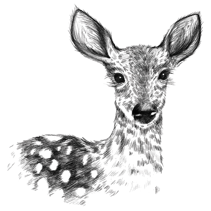 Sofie Rolfsdotter (Deer) Canvas Prints