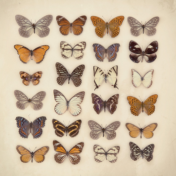 Ian Winstanley (Butterfly Collection) Canvas Print