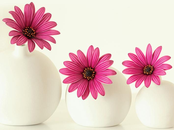 Alyson Fennell (Pink Cape Daisies) Canvas Prints