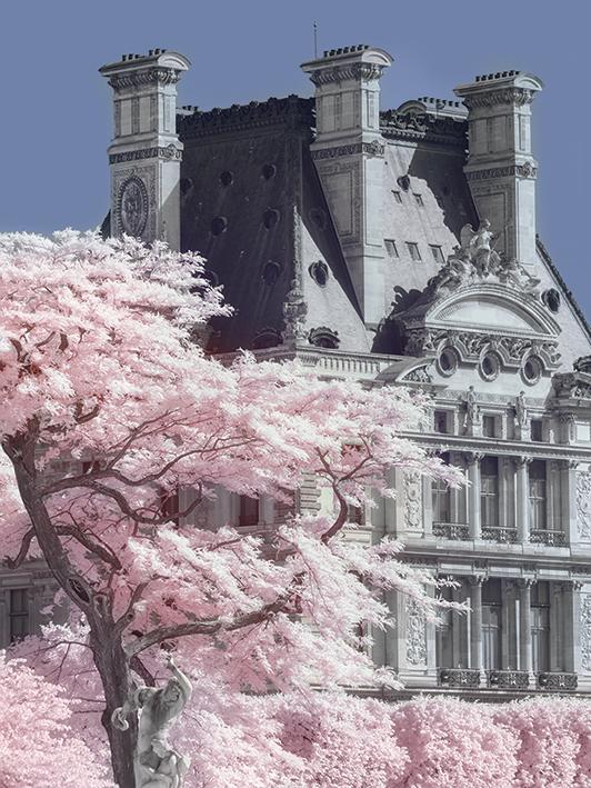 David Clapp (Jardin de Tuilieres Infrared, Paris) Canvas Prints