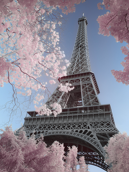 David Clapp (Eiffel Tower Infrared, Paris) Canvas Prints